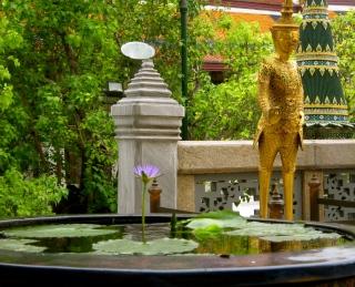Lillies in Bangkok